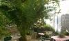Vila GLISOVIC, Risan, Apartmani